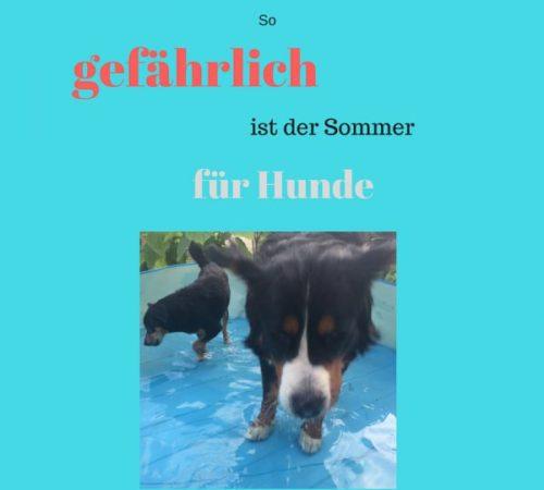 hund sommer gefahren