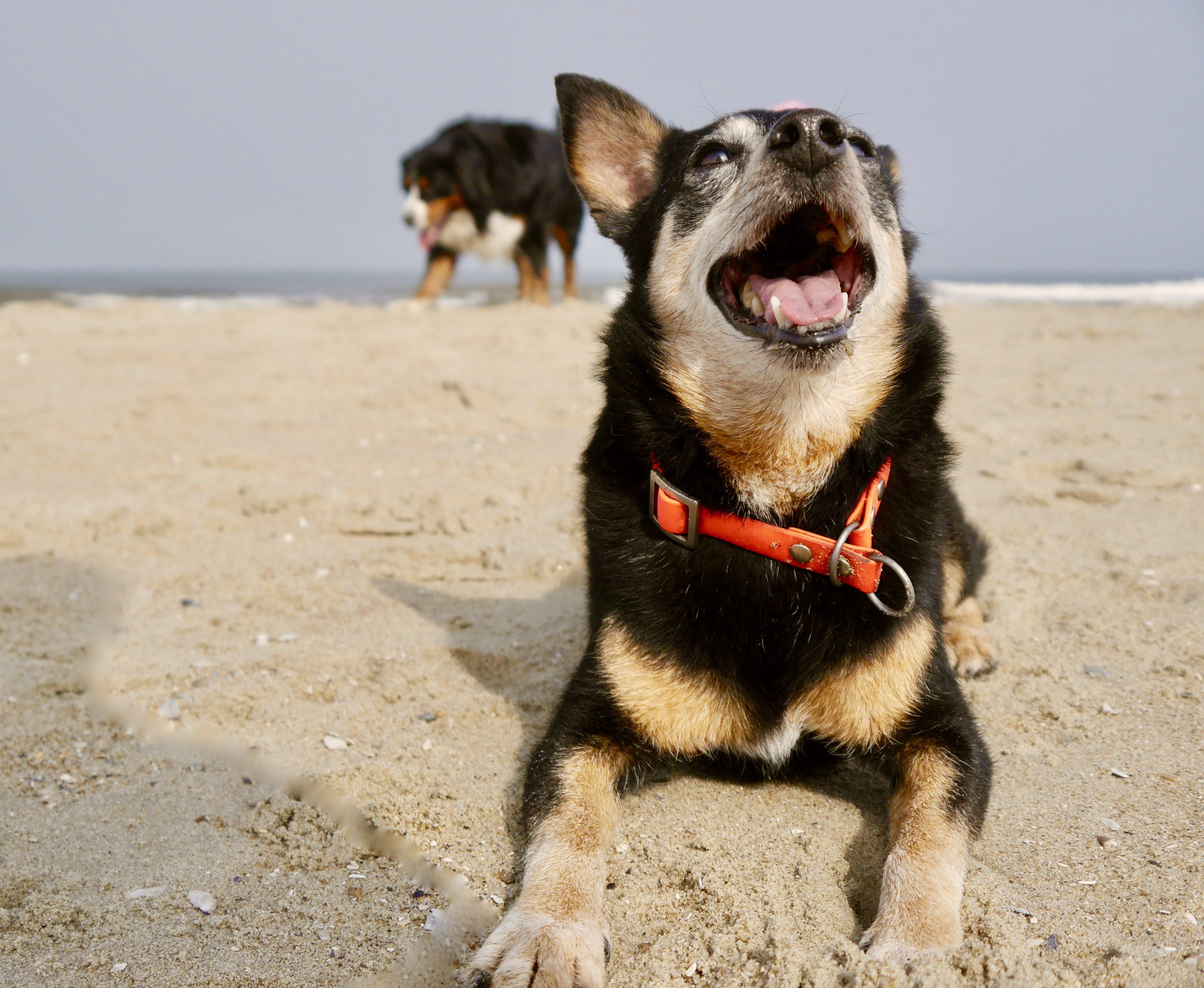 Hund auf Texel