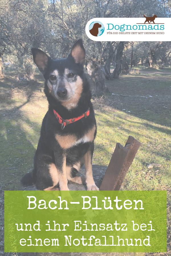Bachblüten Erfahrungen Hund