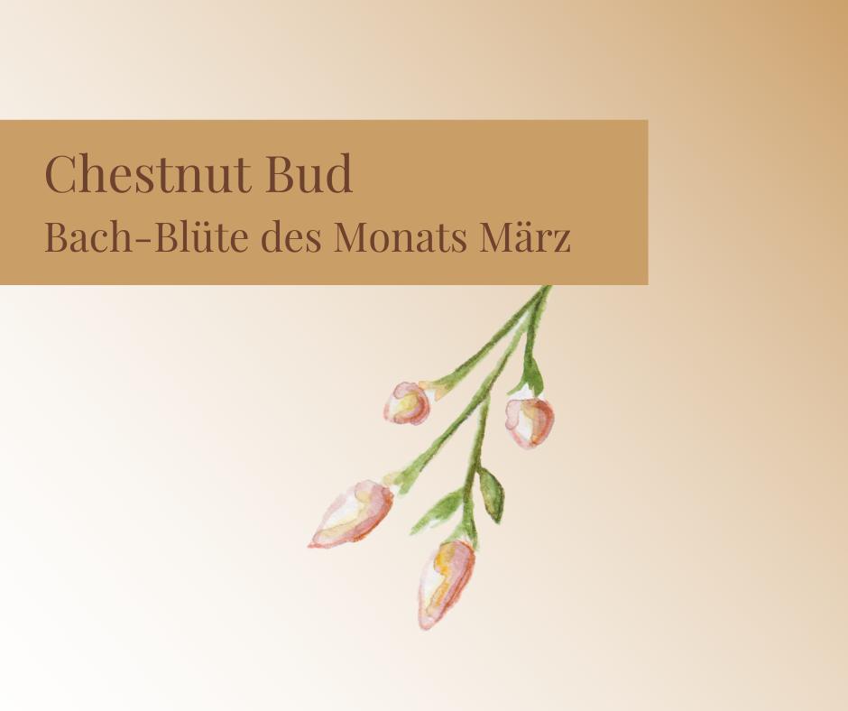 Chestnut Bud